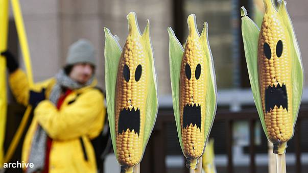 Report claims link between animal health and GM crops