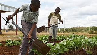 1.5 million people face hunger in Zimbabwe