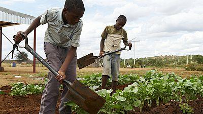 Zimbabwé : 1,5 millions de personnes souffrent de la faim