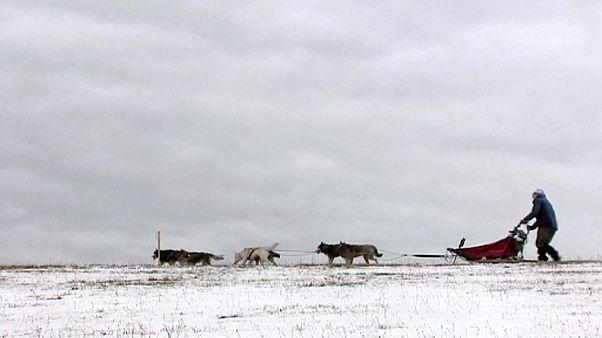 الطقس الدافئ يعيق سباق زلاجات الكلاب في التشيك