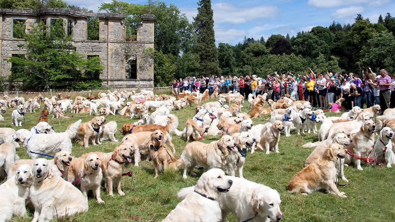 150th Anniversary of the Golden Retriever