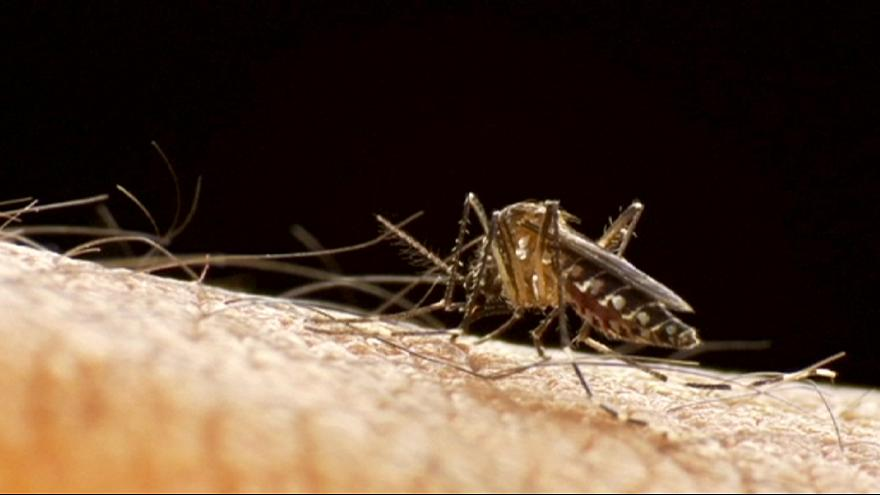 Zika virus: WHO fearful of spread into Africa, Asia, Europe and US