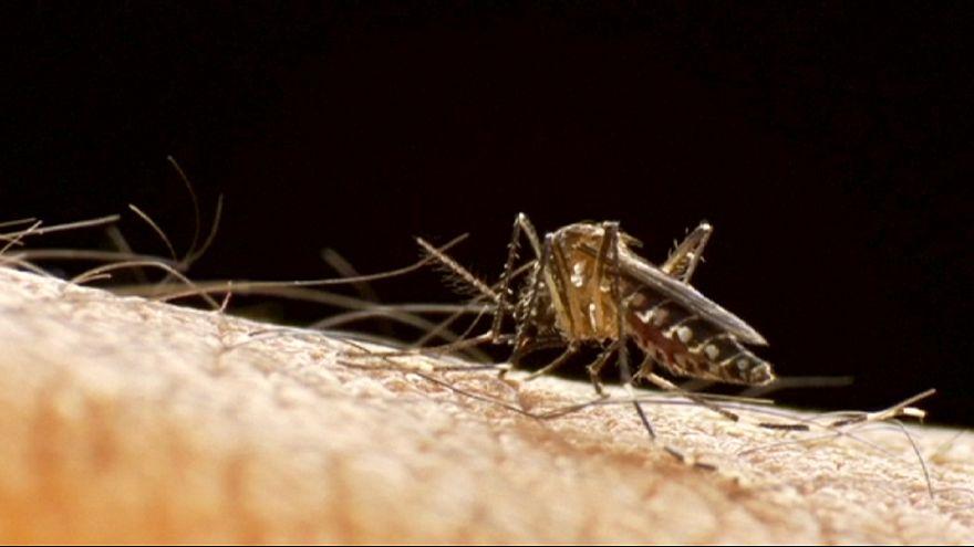 Zika'nın yayılmasından endişe ediliyor