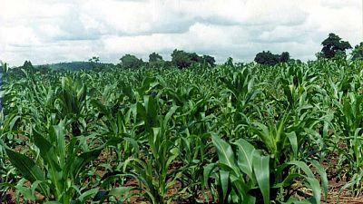 """Ouganda :  quand l'application """"Agromarket Day'' révolutionne l'agriculture"""