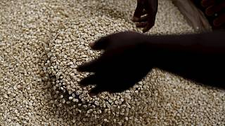 South Africa: Grain SA lowers 2016 imports estimates