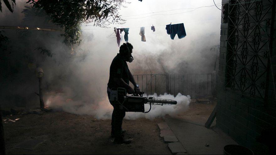 """Zika: """"4 milioni di casi in America Latina nel 2016"""" (Organizzazione Panamericana della Salute)"""