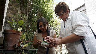 Zika: do alerta global à corrida à vacina