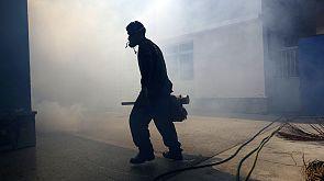 Caccia alle zanzare in America Latina