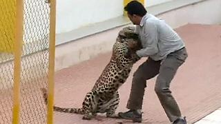 Un léopard dans une école du sud de l'Inde