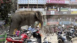 Elefante enlouquece na Índia