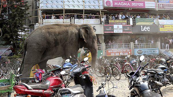 Elefant trampelt durch indische Stadt