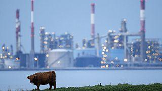 مقاومت شرکت توتال در برابر سقوط شدید قیمت نفت