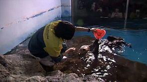 Un corazón helado en la víspera de San Valentín