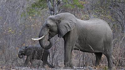 Rangers take the bullet for elephants in the DRC