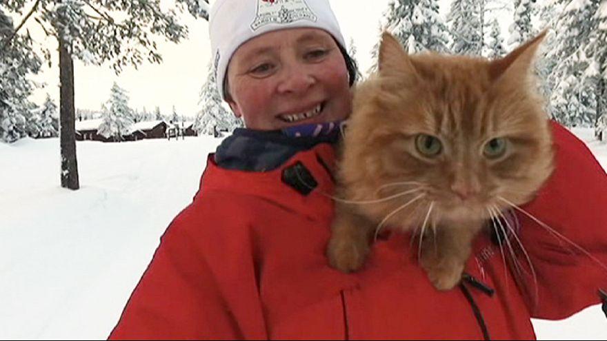 Norwegian adventure cat