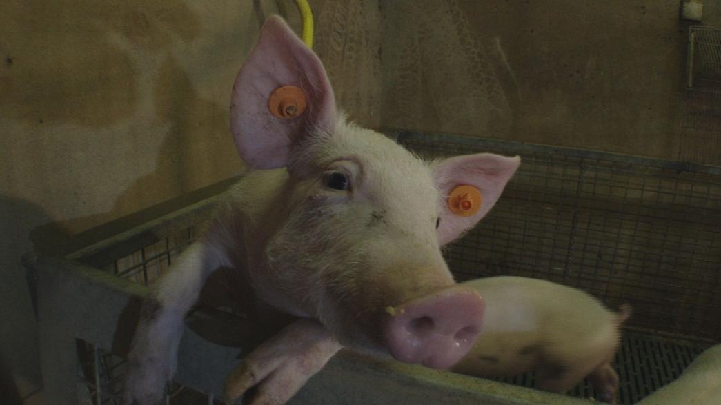 Getrocknete Essensabfälle: Das Tierfutter der Zukunft?