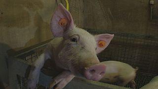 Azeitonas, cenouras e iogurtes: A nova geração de rações animais