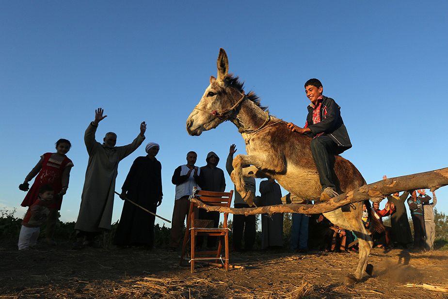 Un jeune Egyptien entraine son âne au saut d'obstacle