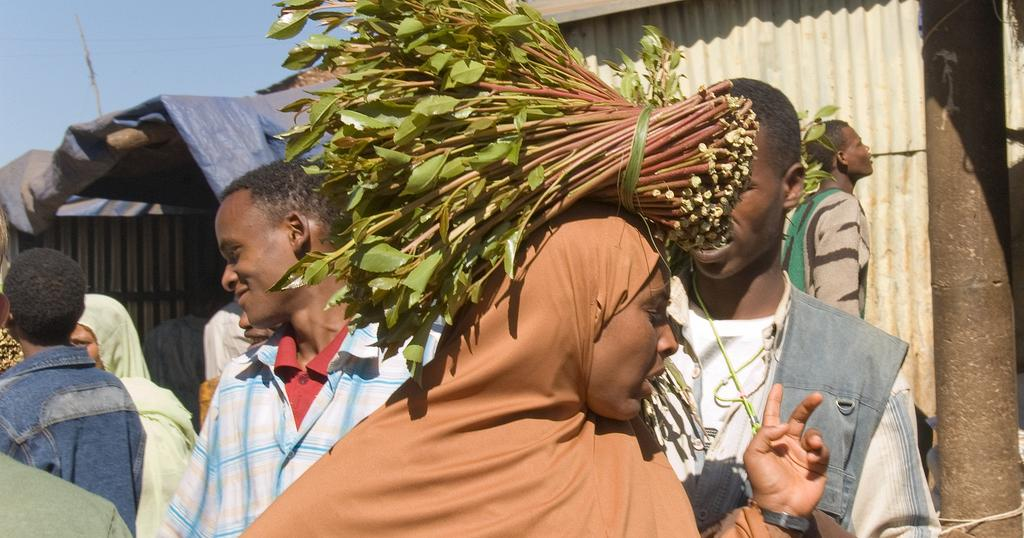 Madagascar flirts with food crisis as Khat fields replace