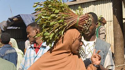 Madagascar flirts with food crisis as Khat fields replace staple crops