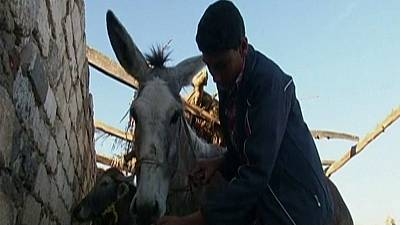 Egyptian boy trains donkey to jump hurdles