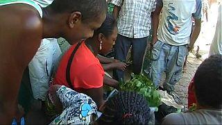 Des paysans malgaches se tournent vers la culture du Khat