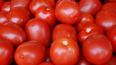 Nigeria : les difficultés des producteurs de tomate concentrée.