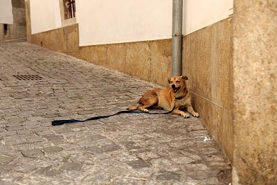 Zigy pants from the heat despite lying in the shade in one of Lisbon\'s oldest districts, Alfama.