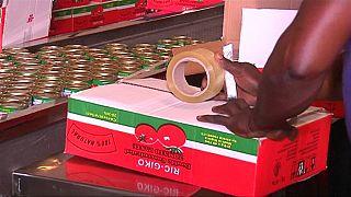 Nigeria deuxième producteur de tomates de l'Afrique malgré les défis