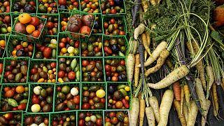 Afrique du Sud : les femmes de Cape Town se lancent dans la micro-agriculture