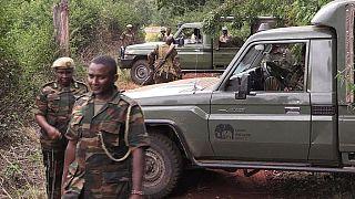 Kenya: search for escape lionesses continue