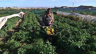 Les femmes de Cape Town en Afrique du Sud se tournent vers la micro-agriculture