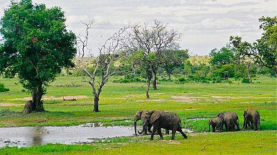 Empoisonnement d'animaux sauvages en Afrique du Sud