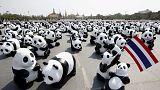 تجمهر لحيوانات الباندا