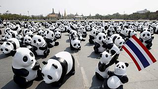 Thailand: Pandamonium!