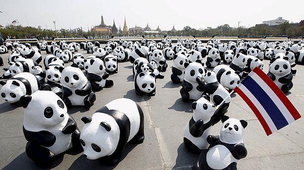 Thailandia: l'invasione dei panda!