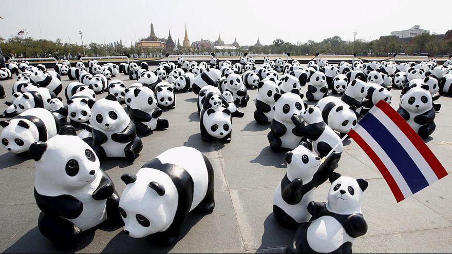 """Tailândia: """"Pandamónio""""!"""