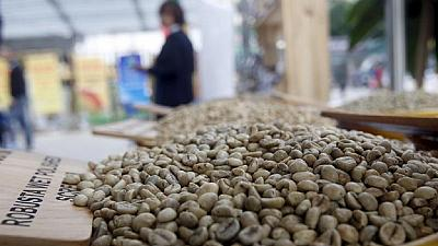 Cameroon: CCIC to produce 2 million coffee plants by 2017
