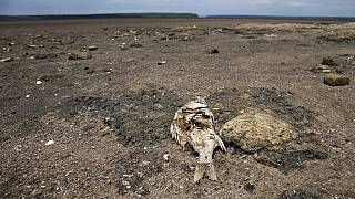 South Africa lost one billion dollars to acute drought