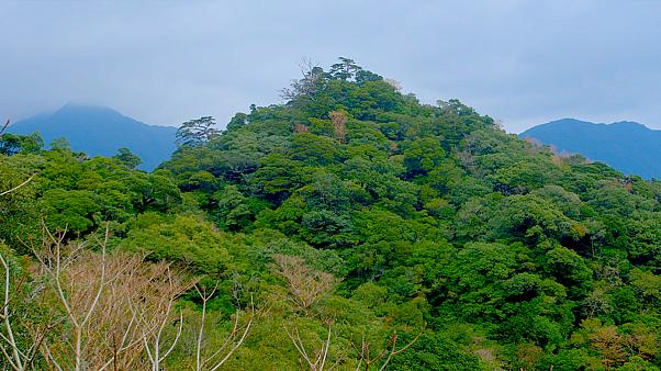 A lush island paradise of mountains and ancient trees