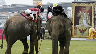 14th Edition of Elephant Polo Tournament held in Thailand