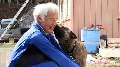 5 Jahre nach Fukushima: Herr Matsumura füttert die Tiere
