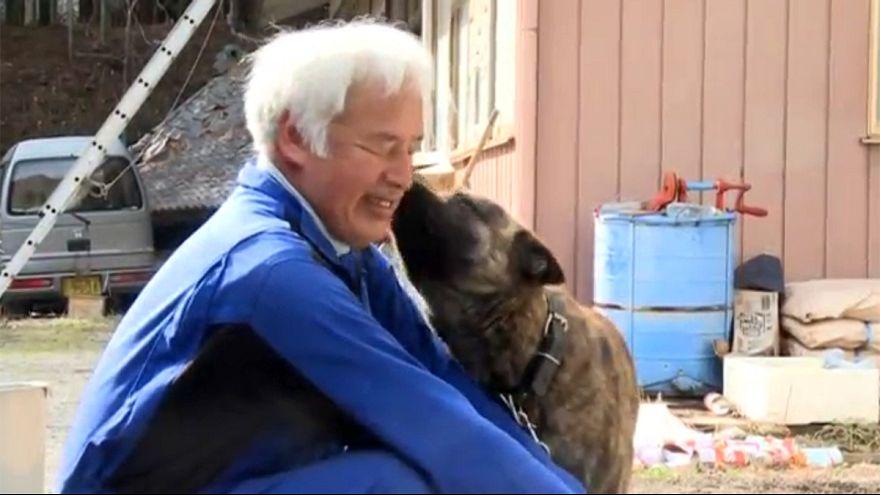 Gli animali di Fukushima
