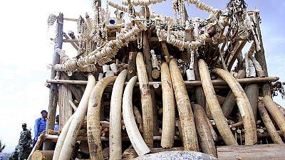 Malawi destroys $3 million worth of ivory
