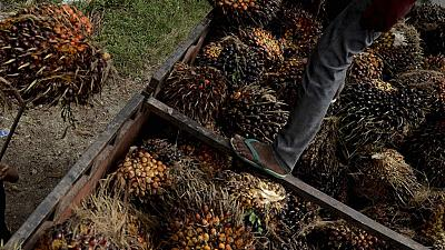 France's proposed palm oil tax threatens African farmers - IPPA