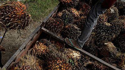 La France veut encore taxer les importations d'huile de palme
