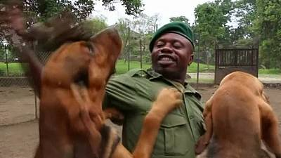 Canine unit helps rangers in DRC fight poachers