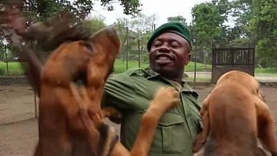 RDC : des chiens pour traquer les braconniers