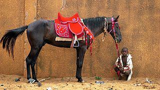 Niger : course de chevaux