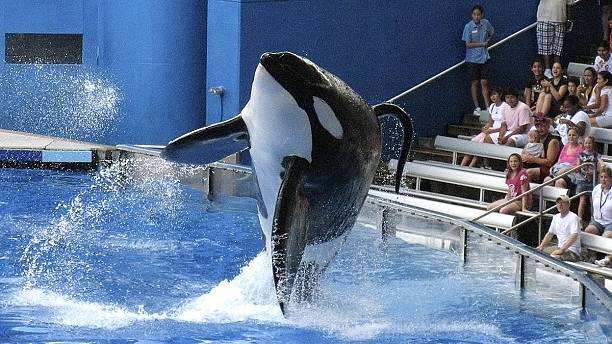 US theme park Sea World stops breeding killer whales